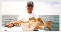 Scalloping & Fishing photo